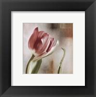 Framed Tulip Front