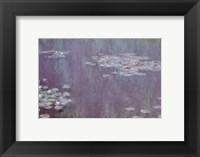 Framed Nympheas