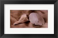 Shell Sonnet lll Framed Print