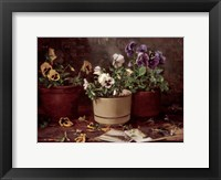 Framed Pansies in Terra Cotta