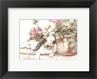 Framed Geraniums Jubilee