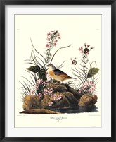 Framed Yellow-Winged Sparrow
