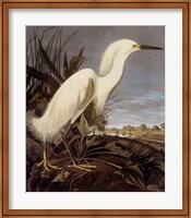 Framed Snowy Heron or White Egret