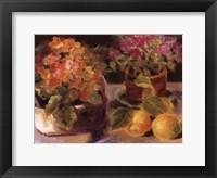 Framed Primrose l