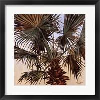 Framed Solitary Palm