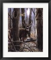 Framed Woodland Sentry