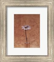 Framed White Daisy