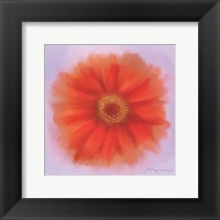 Framed Red Dahlia
