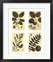 Framed Botanical Four Panel II