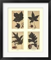 Framed Botanical 4 Panel I