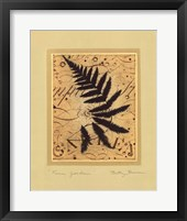 Framed Fern Garden