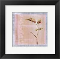 Framed Graceful Orchids II