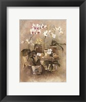 Framed Arrangement of Orchids II-11x14
