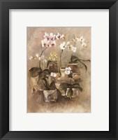 Framed Arrangement of Orchids II-11x14