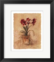 Framed Secret Amaryllis II