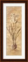 Framed White Narcissus Panel