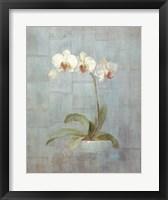 Framed Elegant Orchids II