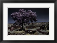 Framed Wisteria Tree