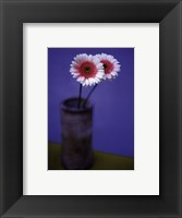Framed Pink Daisies
