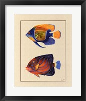 Tropical Fish III Framed Print
