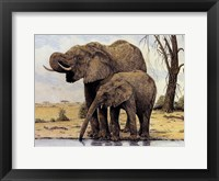 Elephants By The Waterhole Framed Print