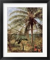 Framed Palm Tree, Nassau 1892