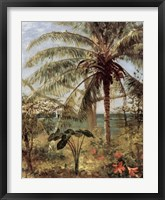 Framed Palm Tree, Nassau 1892