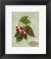 Framed Bookplate Raspberries