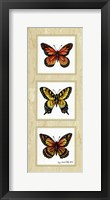 Framed Monarch Butterflies
