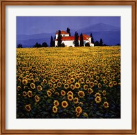 Framed Sunflowers Field