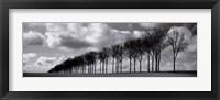 Framed Somme Treeline