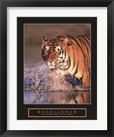Framed Excellence - Bengal Tiger
