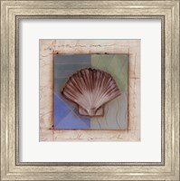 Framed Shell Accents IV