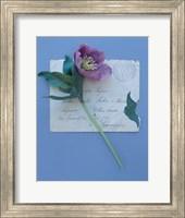 Framed Emma's Garden Heelborus