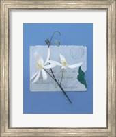 Framed Emma's Garden Clematis