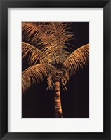Framed Palm Oro