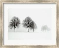 Framed Winter Trees II