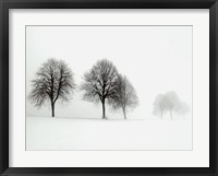 Framed Winter Trees II