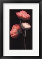 Framed Poppy Trio