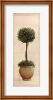Framed Topiary Ball I