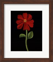 Framed Red Cosmos