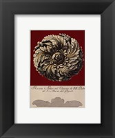Rosone Antico IV Framed Print