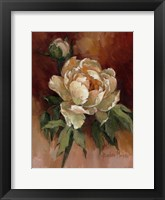 Framed White Peonies II