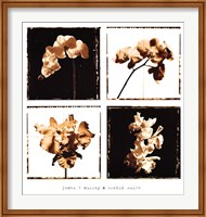 Framed Orchid Suite