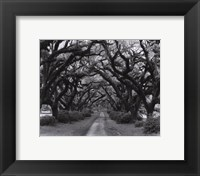 Framed Path In The Oaks #2, Louisiana