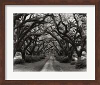 Framed Path In The Oaks #2, Louisiana