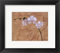 Framed Morning Orchids