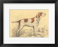 Hunting Dogs-Griffon Framed Print