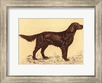 Framed Hunting Dogs-Setter