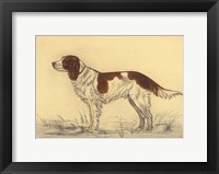 Framed Hunting Dogs-Spaniel